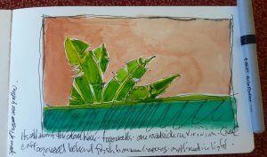 Sketch of greenery in bermuda